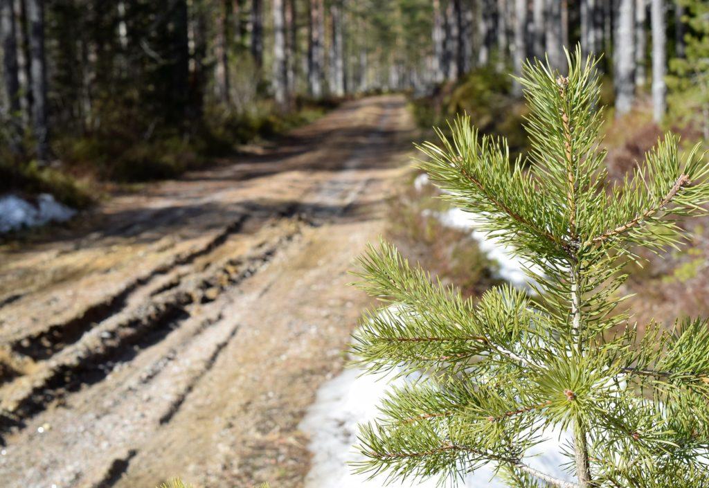 Tilskudd til skogsveier