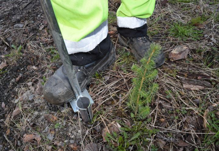 Redskapet kalles plantespett eller hullpipe, som lager et hull til plantens rot