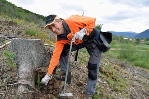 Nettkurs for skogplantere og skogeiere