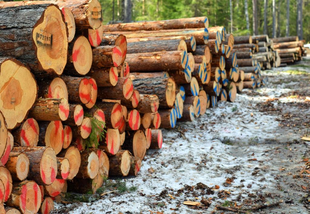 AT Skog øker prisen på furu