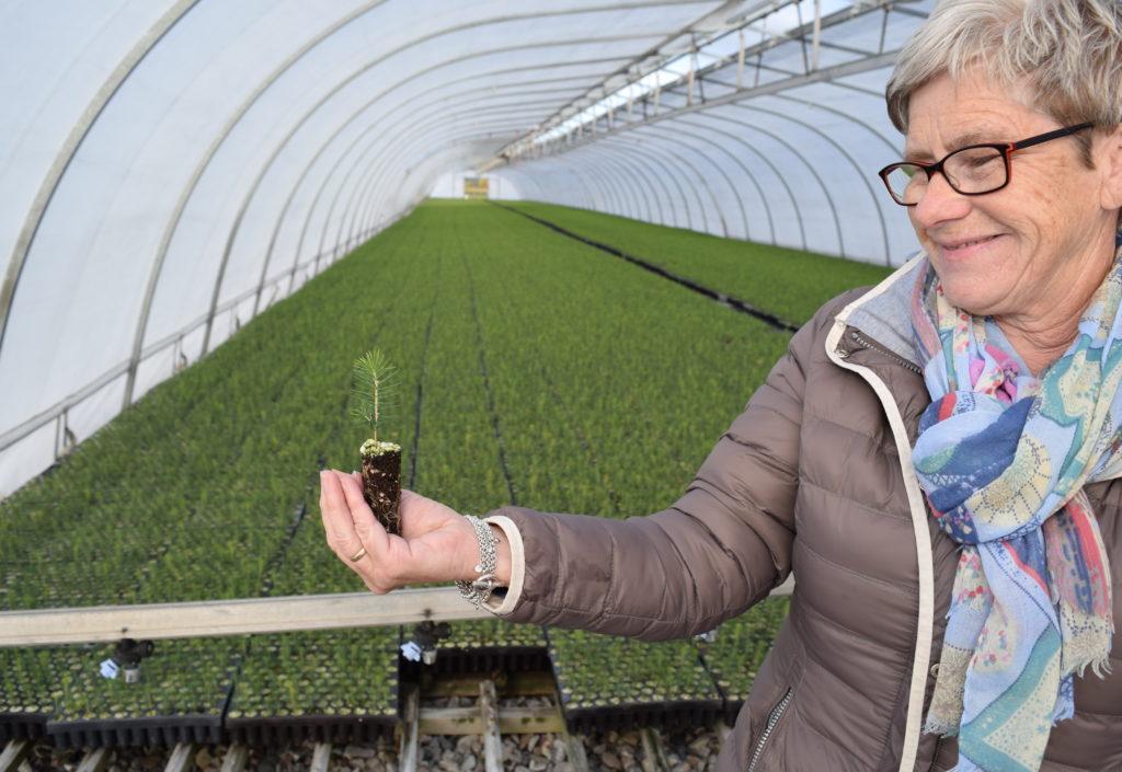 Snart klart for Norgesplanter