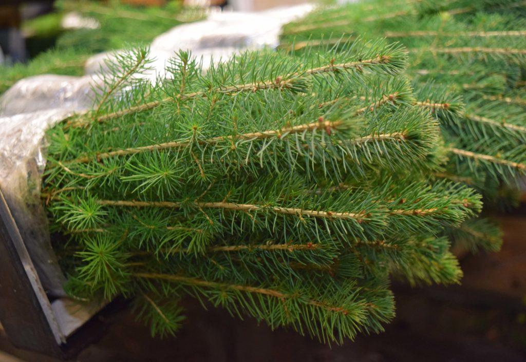 Tilskudd til tettere planting