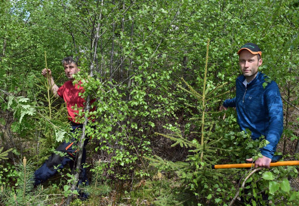Kampanjepris på skogpleie i juni!
