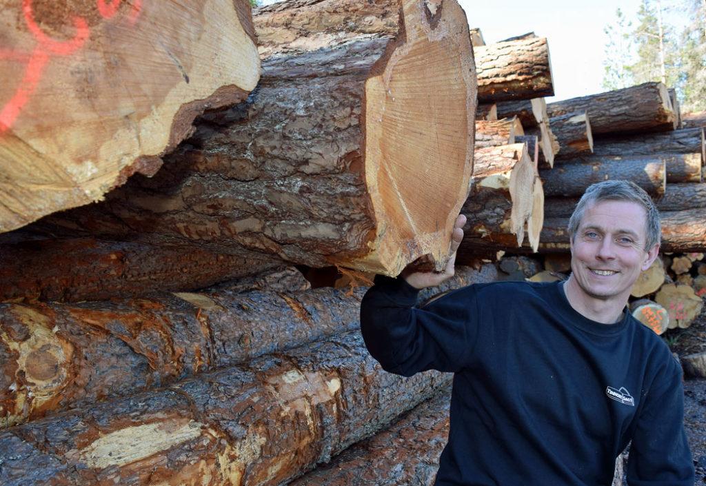 Harald kjøper de største stokkene