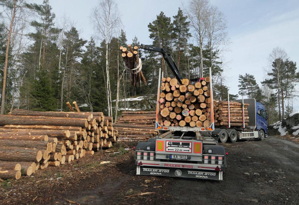 Tømmermarked og priser vinter 2019/20