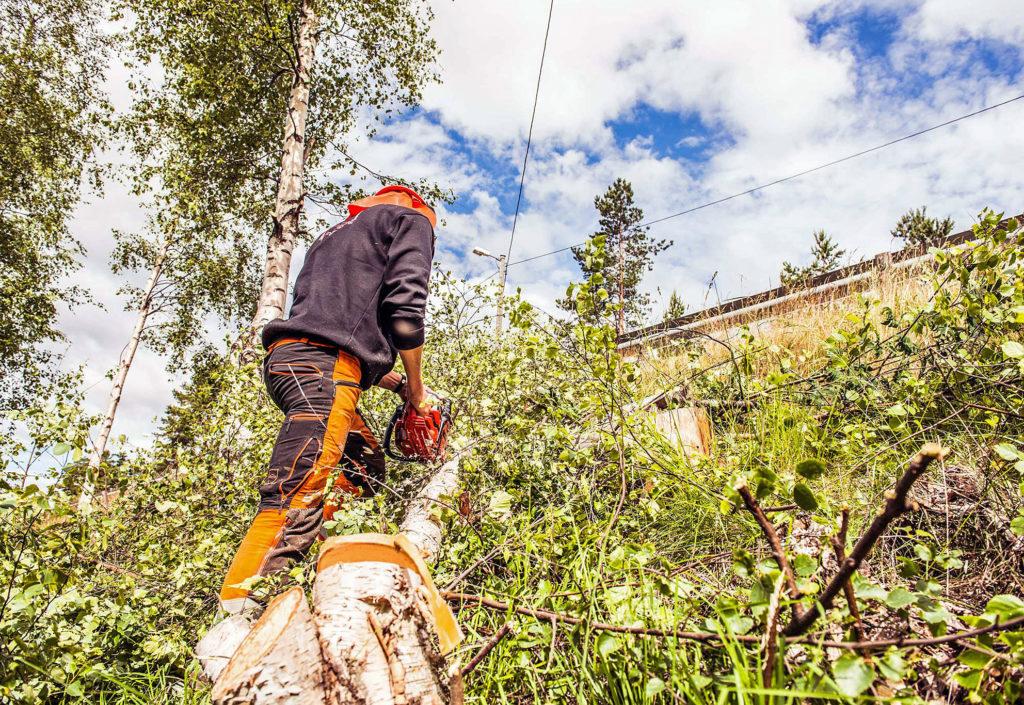 AT Skog kjøper Agder Linjerydding