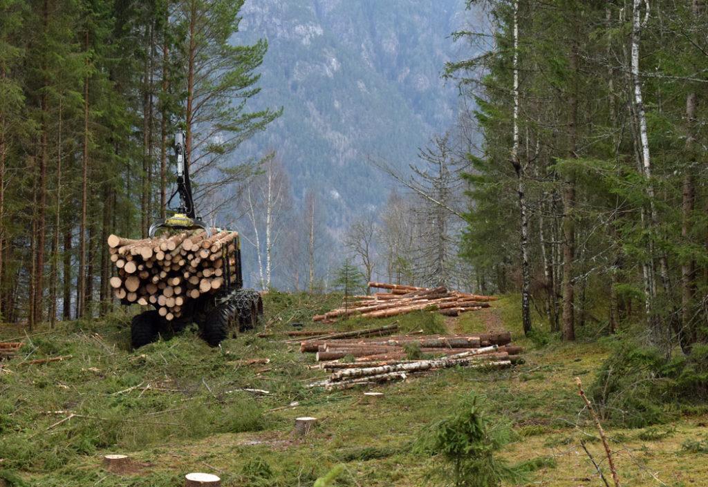 Normal drift i AT Skog med smittebekjempende tiltak