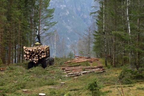 AT Skog bistår entreprenørene