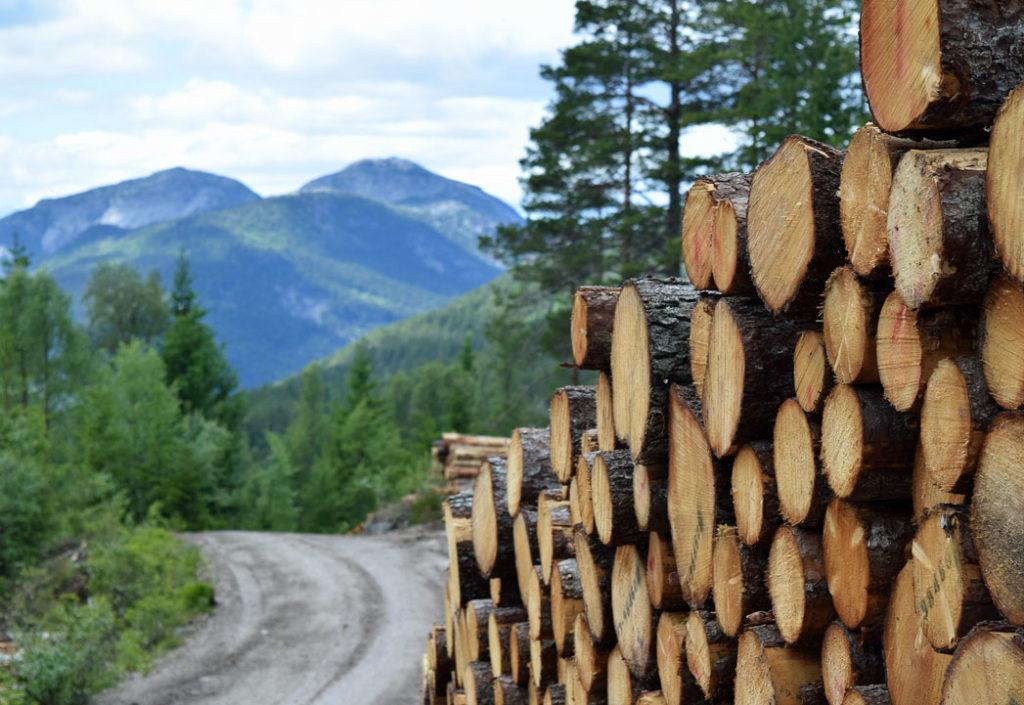 Hogsten tas opp igjen i Telemark