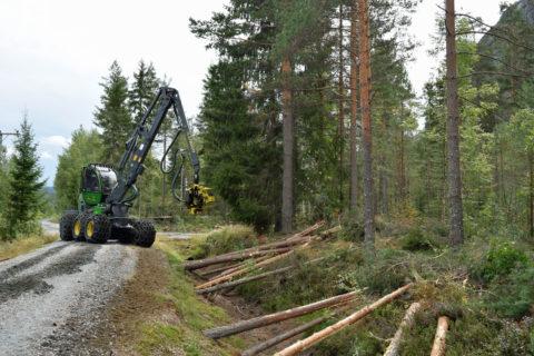 Vi søker skogbruksleder i Agder