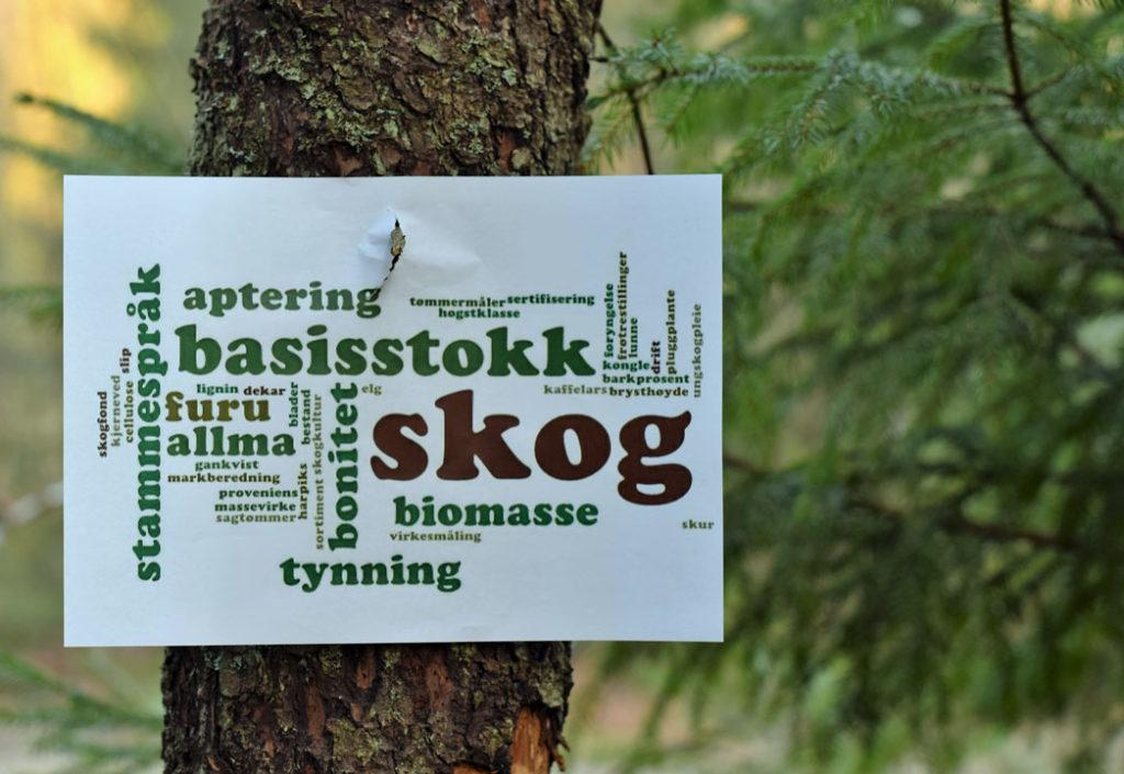 Sammen om nyinvesteringer i skog
