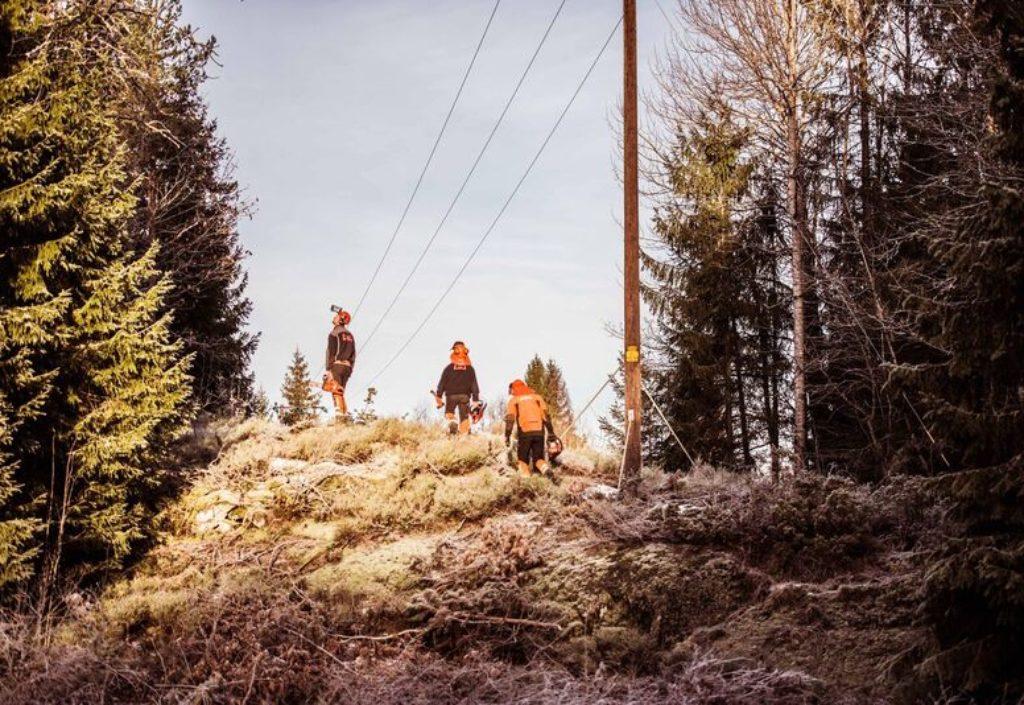 Norsk Skogrydding søker daglig leder