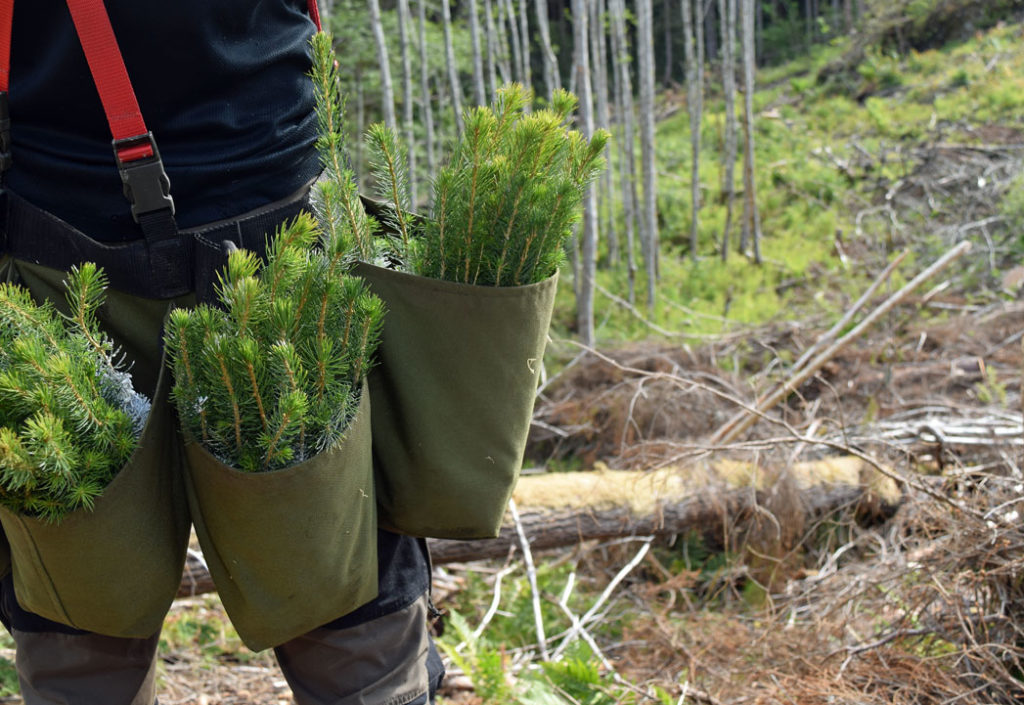 Husk plantebestillingsfrist 20. august