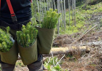 Justere skogfondsats? Les her