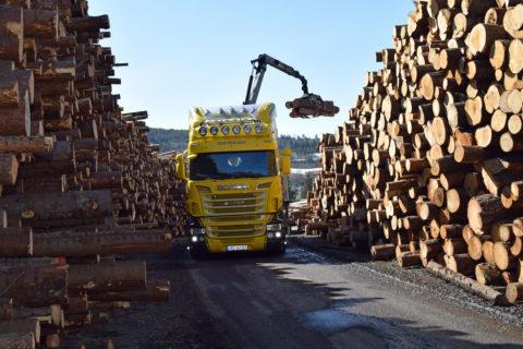Rekord i tømmervolum og planting i 2019