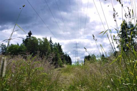 Søker prosjektledere til skogrydding