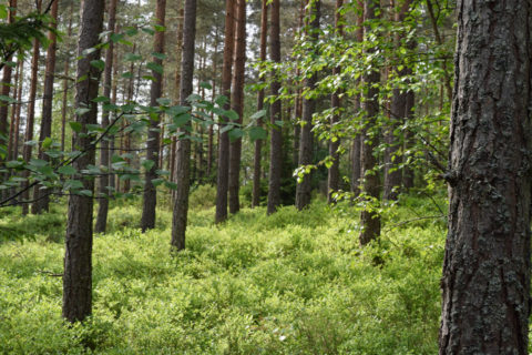 AT Skog vil ikke bruke sin forkjøpsrett